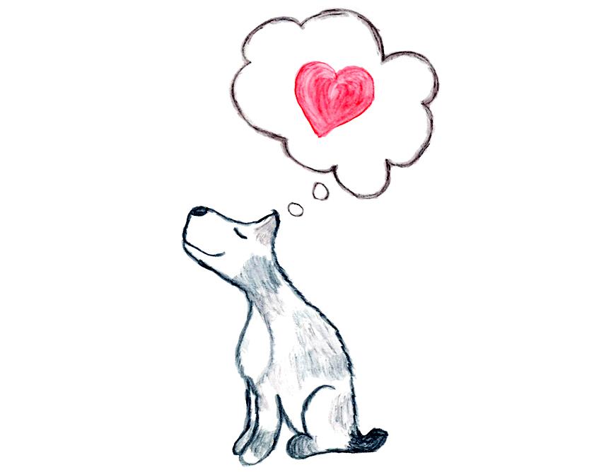 dog-heart